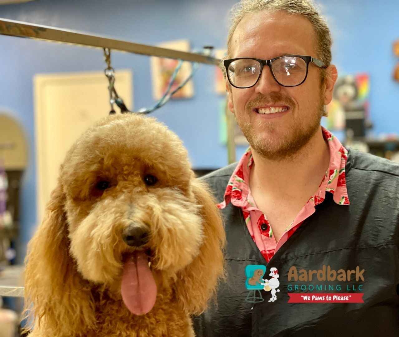 aardbark dog groomers - head shot pictures with dogs being groomed in the picture (3)